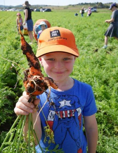 Carrot Day 2017 GW-1050812
